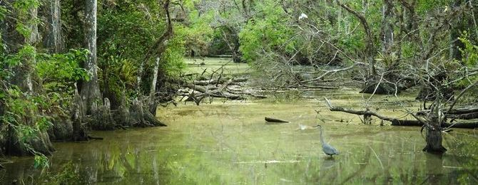 A federal-state plan to restore the nearly destroyed ecosystem of the Florida everglades is beginning to pay off.  The plan, upon its projected completion in 2030, will restore the ecosystem in the park's 1.5 million acres, about half of what originally covered the region.
