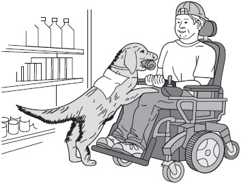 FIGURE 8.3 A service dog assisting a disabled person