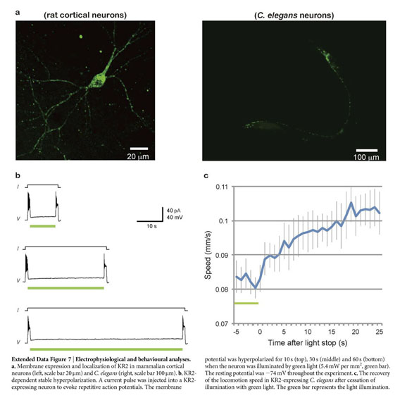 Gale Academic OneFile - Document - Structural basis for [Na sup +]