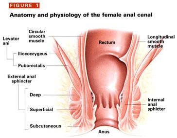 anal sphincter