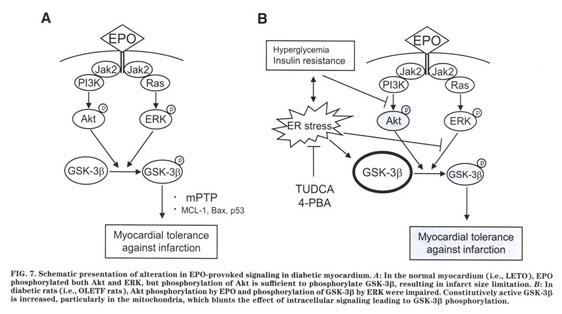 Academic OneFile - Document - Endoplasmic reticulum stress in