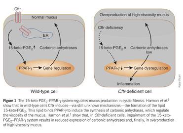 Academic OneFile - Document - Lipids control mucus