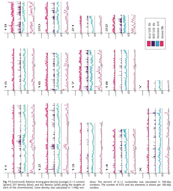 Academic Onefile Document The Sequence Of The Human Genome