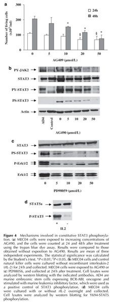 Academic OneFile - Document - STAT3 transcription factor is