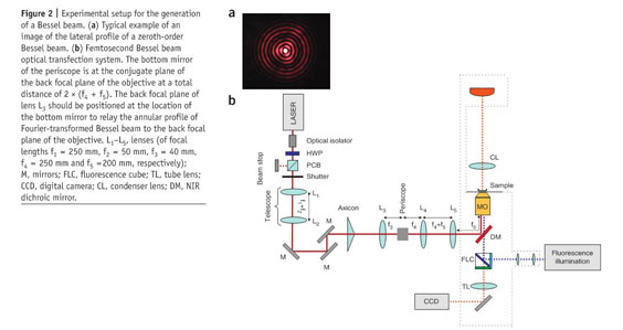 Academic OneFile - Document - Femtosecond optical transfection of
