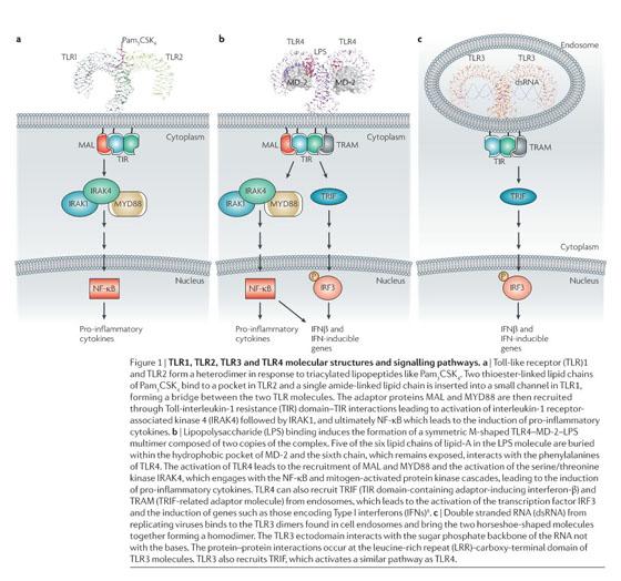 Academic OneFile - Document - Targeting toll-like receptors