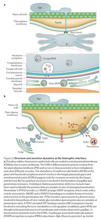 Cheap write my essay visualization of the exocyst complex dynamics at the plasma membrane of arabidopsis thaliana