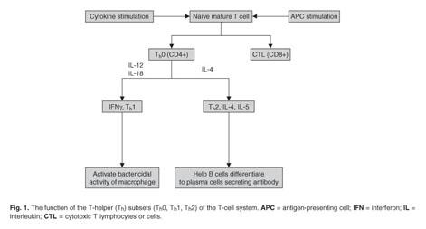 phentermine accutane
