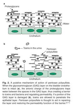 Pentosan Polysulfate Sodium Injection Australia