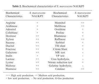 serratia marcescens test results