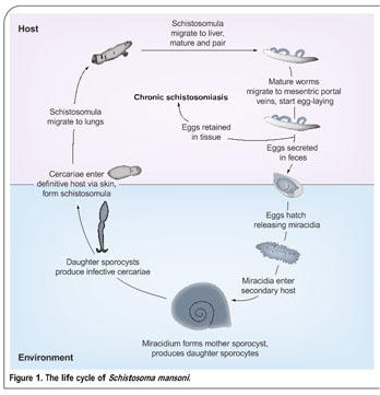 Academic onefile document current status and future prospects schistosomiasis can be divided into acute and chronic phases the severity and occurrence of each phase depending upon the species of schistosome and the malvernweather Choice Image