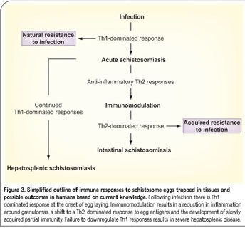 Academic onefile document current status and future prospects noninvasive methods are available to follow inflammatory lesions in the bladder and urinary tract malvernweather Choice Image