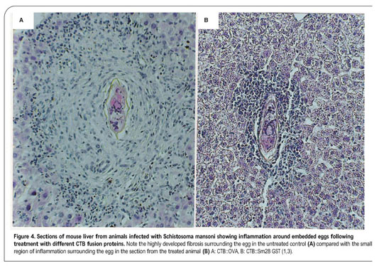 Academic onefile document current status and future prospects a role for parasite induced pge2 in il 10 mediated host immunoregulation by skin stage schistosomula of schistosoma mansoni j immunol malvernweather Choice Image