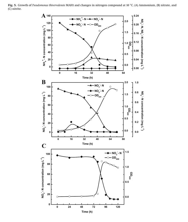 academic onefile - document - btex biodegradation and its nitrogen removal  potential by a newly isolated pseudomonas thivervalensis mah1