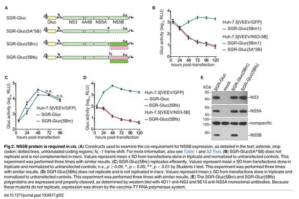 Academic OneFile - Document - Hepatitis C virus RNA replication