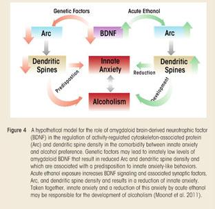 Academic OneFile - Document - Stress, epigenetics, and alcoholism