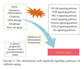 Academic OneFile - Document - An Update on Inflamm-Aging: Mechanisms