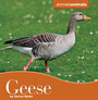 Geese cover