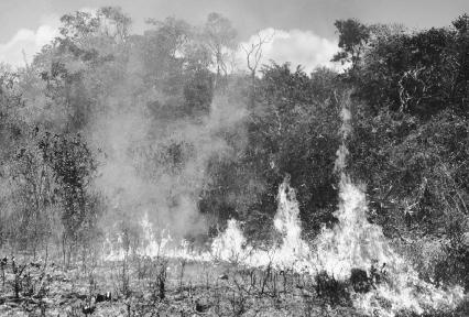 A field prepared for planting crops by burning, according to the Maya farming custom.  Charles  Josette Lenars/Corbis.