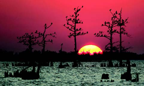 Efforts to restore the fragile ecosystem of coastal wetlands were dealt a severe setback by Hurricane Katrina (2005).