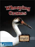 Whooping Cranes image