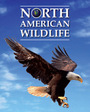 North American Wildlife cover