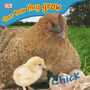 Chick cover