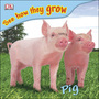 Pig cover