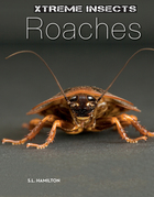 Roaches image