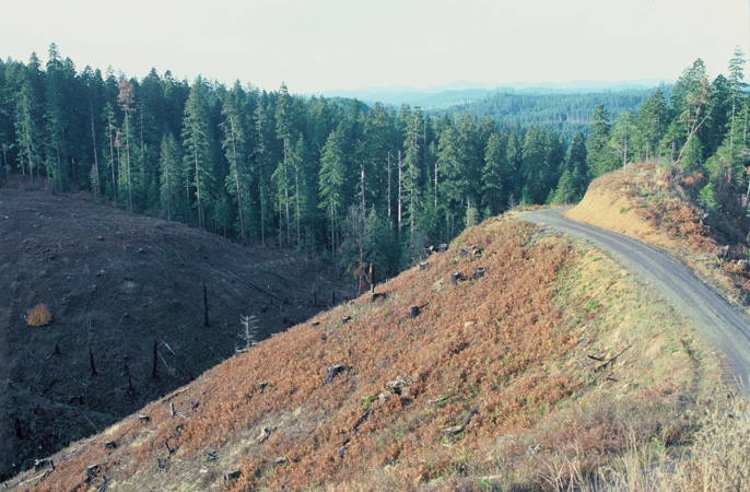 Clear-Cutting of the Spotted Owls Habitat, Oregon. Clear-cutting is a method of logging in which...
