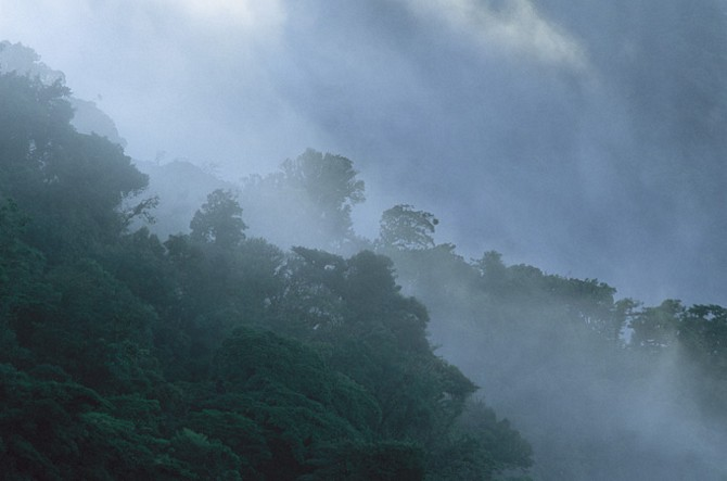 The breathtaking Monteverde Cloud Forest in Costa Rica.