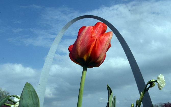A flower grows tall in a park across the street from the Gateway Arch as temperatures continue to remain above average at 75 degrees in St. Louis on April 7, 2010. A cold front is expected to move in putting the temperatures back to normal in the lower 60's.