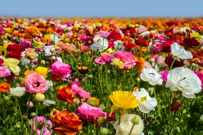 An image of a field of flowers.