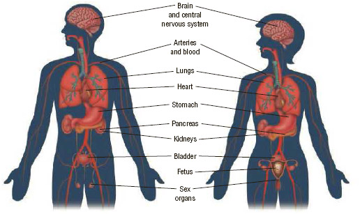 Drug addiction affects almost every organ in the human body.