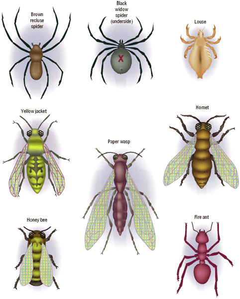 Types of spiders and insects that bite and sting.