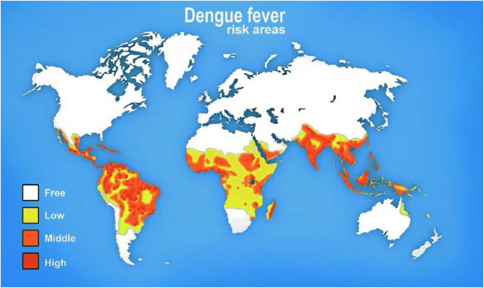 The areas of the world at risk of dengue transmission. Dengue fever has a close relationship to the regions where the Aedes mosquito lives.
