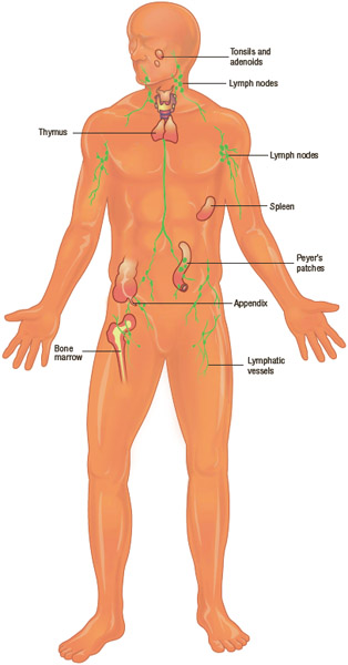 The human body has several lines of defense against infection that work to prevent germs from invading the body, or to destroy the germs once they gain entrance.