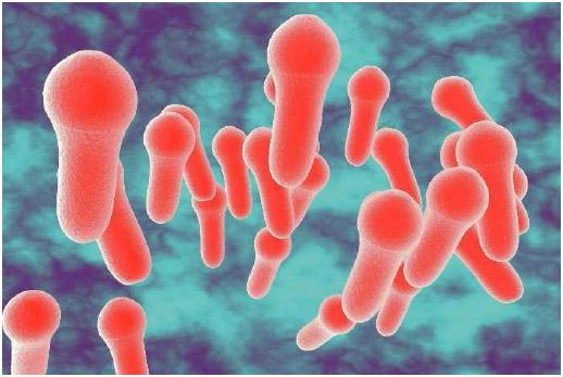 Microscopic illustration of Clostridium tetani.