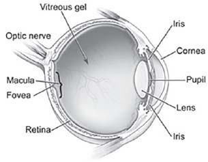 Figure 17.1. Eye