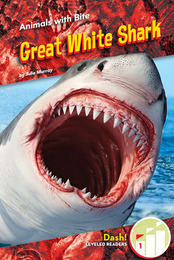 Great White Shark, ed. , v.  Icon