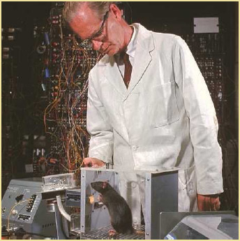 Experimental psychologist B. Frederic Skinner at Harvard University training brown rat in Skinner Box to press lever and be rewarded with food, January 1964.