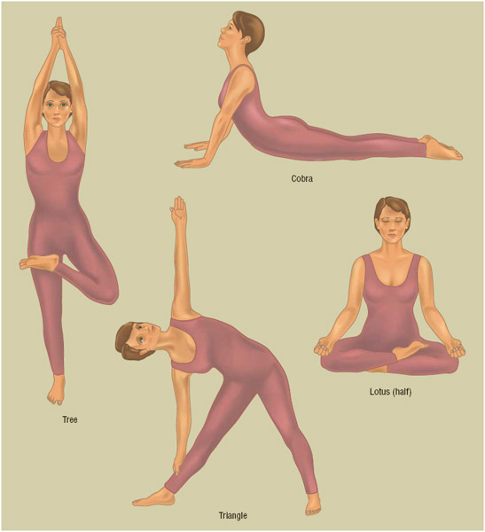 Yoga postures are designed to tone, strengthen, and align the body, with exercises performed to make the spine supple and healthy and to promote proper blood flow to organs, glands, and tissues.