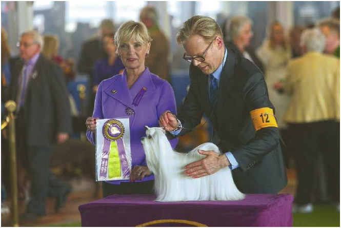 Westminster Kennel Club's dog show is an annual New York City event that was first held in 1877. The show bestows awards, including a Best In Show award, based on how well dogs meet the official standards for their breeds.