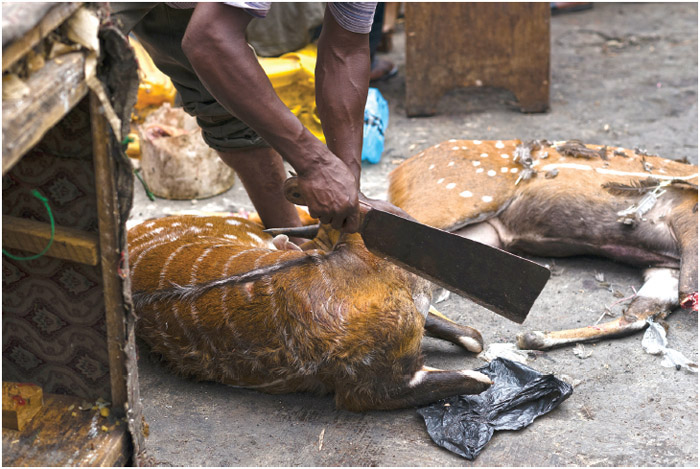 Preparing bushmeat in the Kumasi bushmeat market in Ghana.