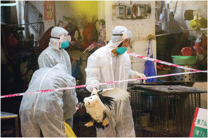 Chinese staff members wearing face masks and protective suits clear away live poultry in a cordoned-off area at a free market in Beihai city, south China's Guangxi Zhuang Autonomous Region, on March 17, 2017.