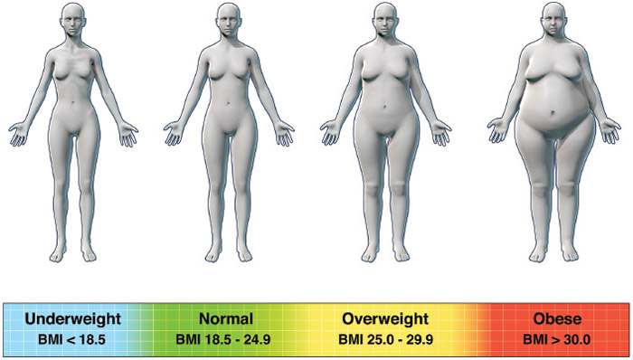 Body Mass Index, Definition, Purpose, Description, Precautions