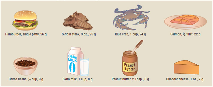 Sources of protein.