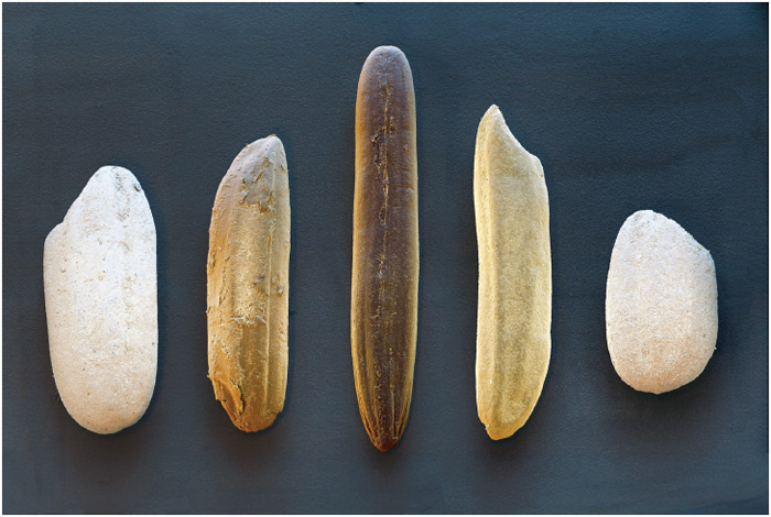 Colored scanning electron micrograph of five different types of rice grain. The types from left to right are: Italian risotto rice, natural rice, wild rice, partly boiled (parboiled) rice, and milk rice.
