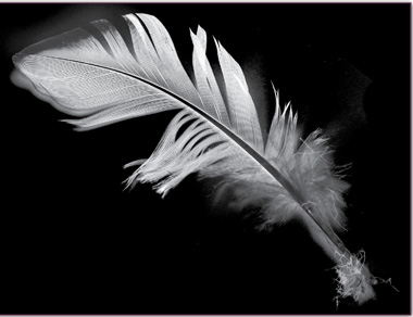 A simple feather can help you make interesting patterns and shapes for your bleach art. Large and interesting feathers can be found at art or craft stores.