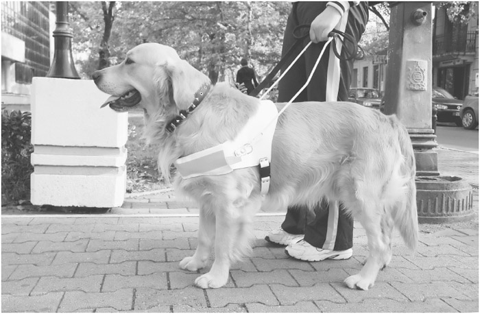 FIGURE 8.4 A trained Seeing Eye dog.